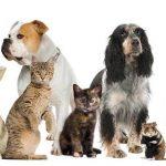 Állatgyógyászati Centrum