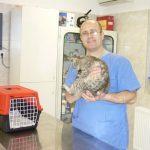 Tarnamenti Állatorvosi Rendelő