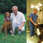 Dr. Juhász Tamás Non-Stop Állatkórház