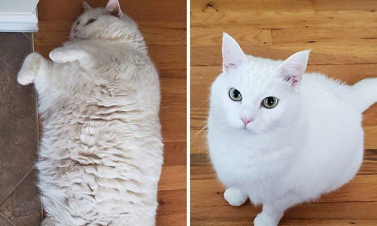 Macskák, akik a nagy fogyás után új életet kezdtek..
